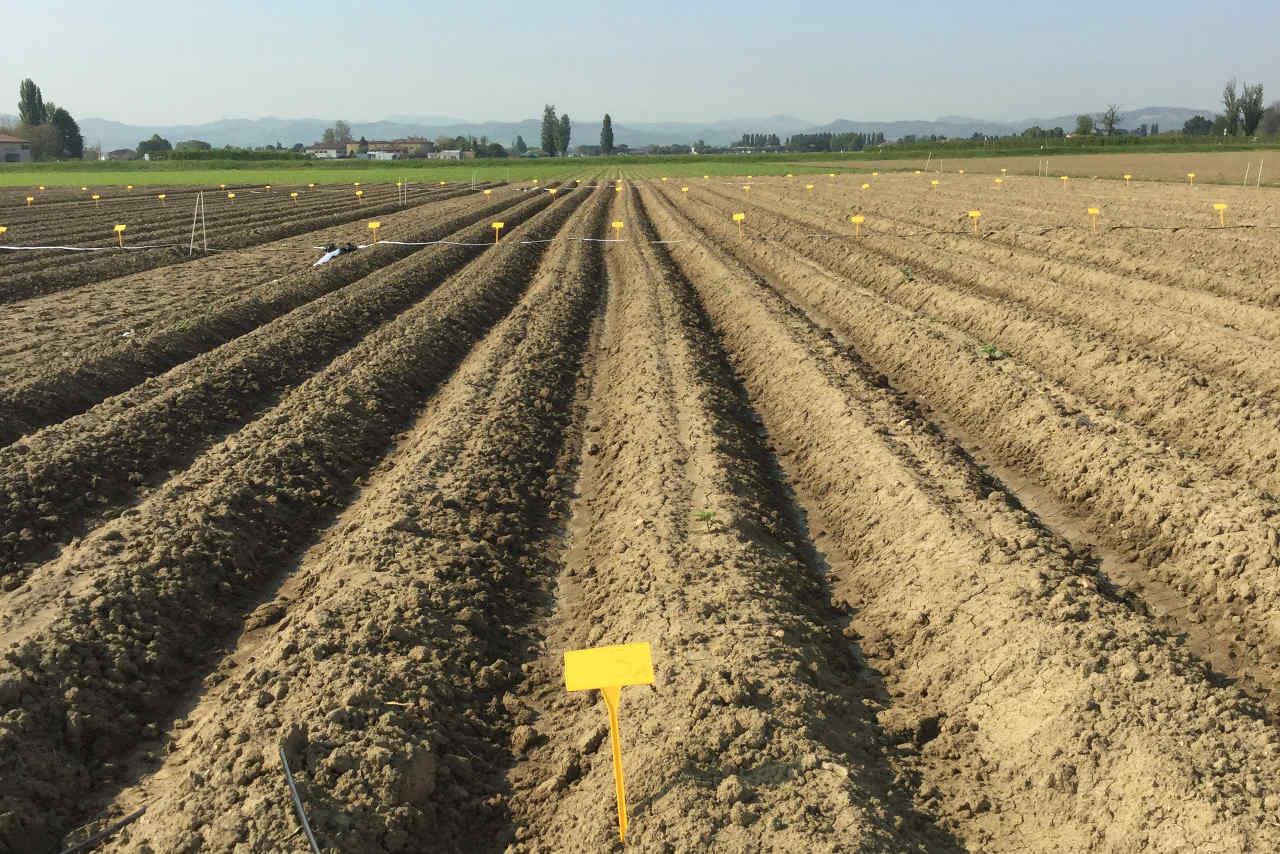 Selenella incontra l'agricoltore del mese: padre e figlio al lavoro all'azienda Bottazzi - Il Blog di Selenella