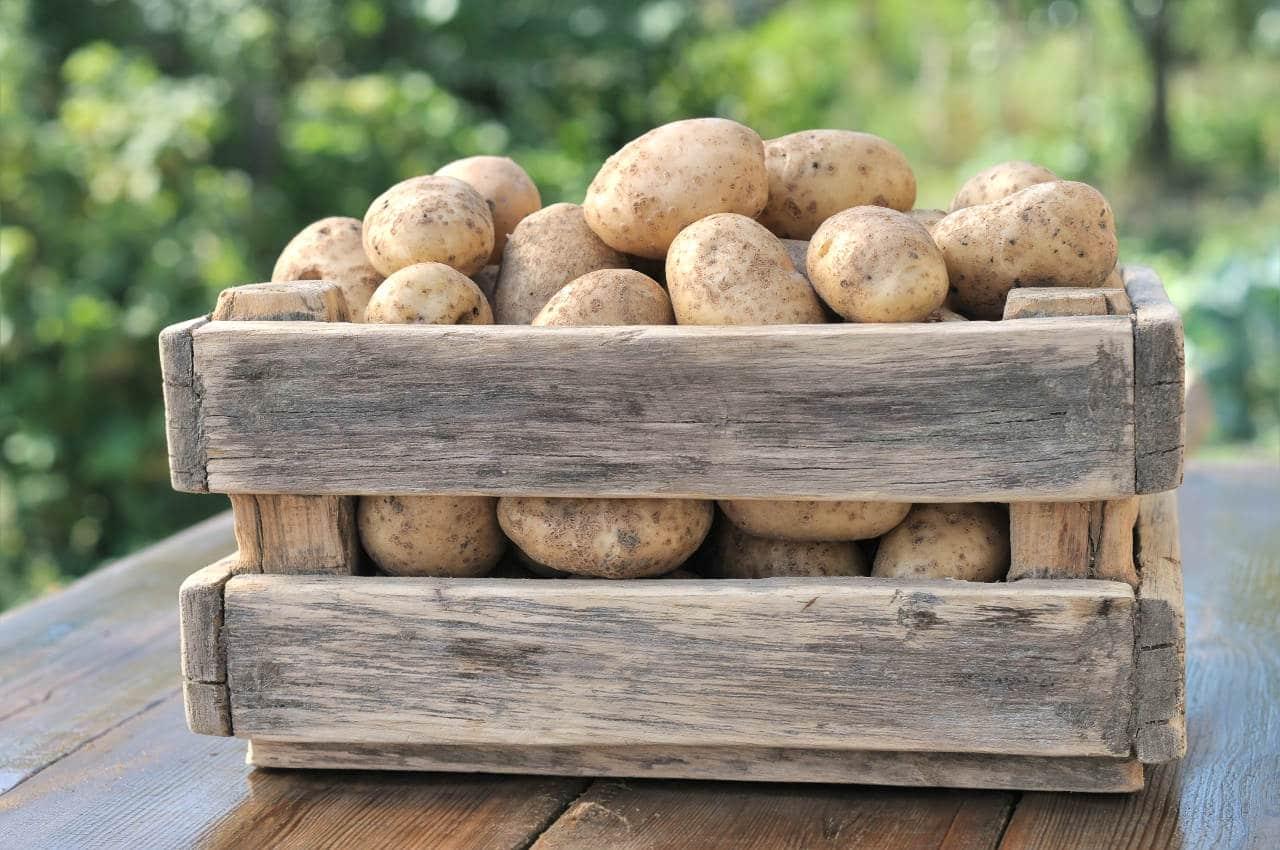 Come conservare correttamente le patate! - Il Blog di Selenella