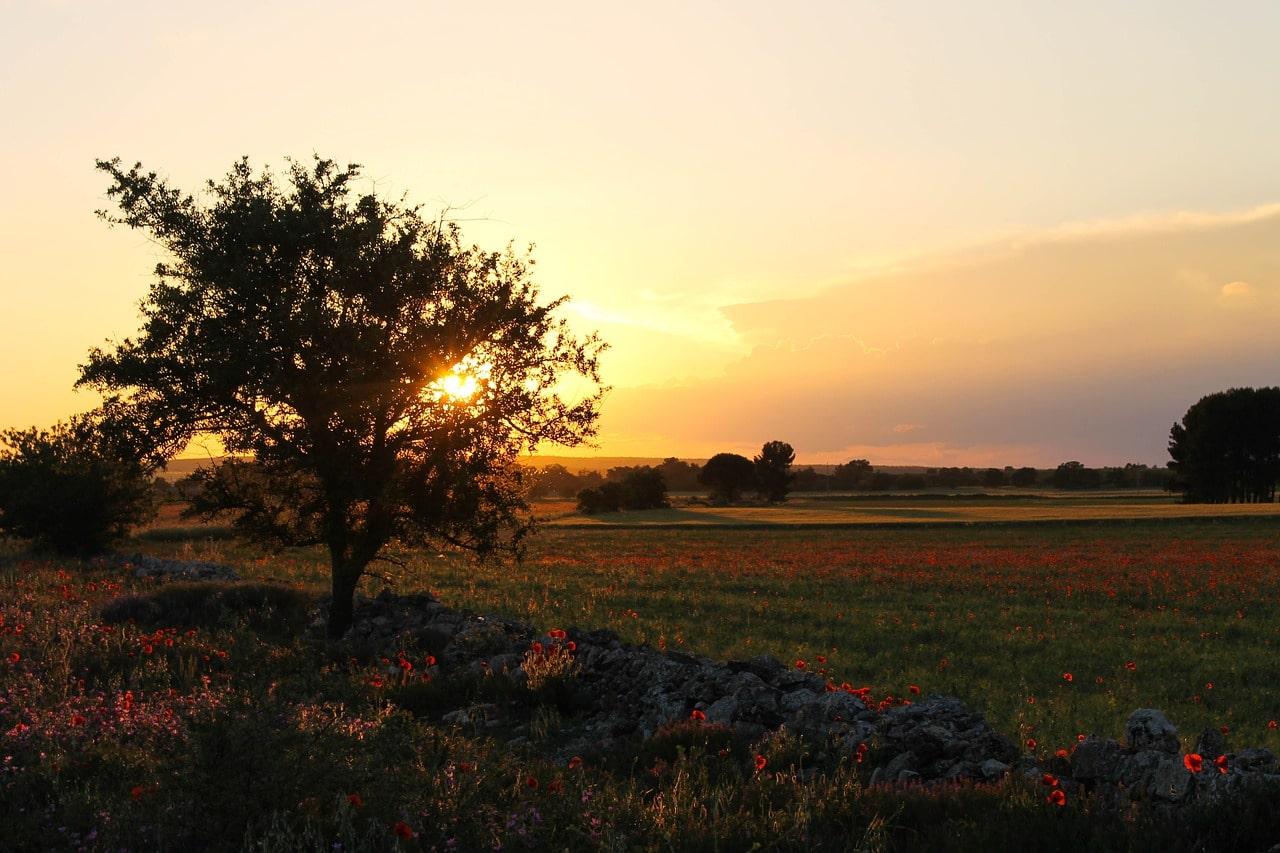 La coltivazione della patata Novella in Puglia - Il Blog di Selenella