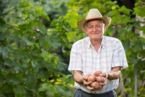 Le patate nella dieta mediterranea degli anziani