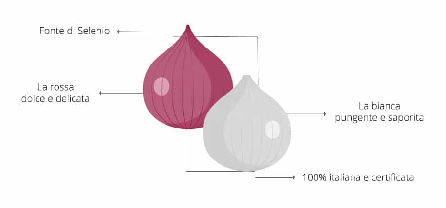 I benefici delle cipolle Selenella