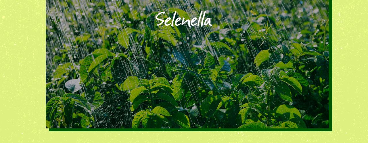 Risorse idriche e consumo idrico in agricoltura - Il Blog di Selenella