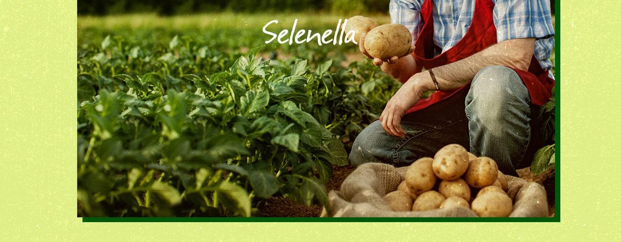 Agricoltura integrata: cosa vuol dire? - Il Blog di Selenella