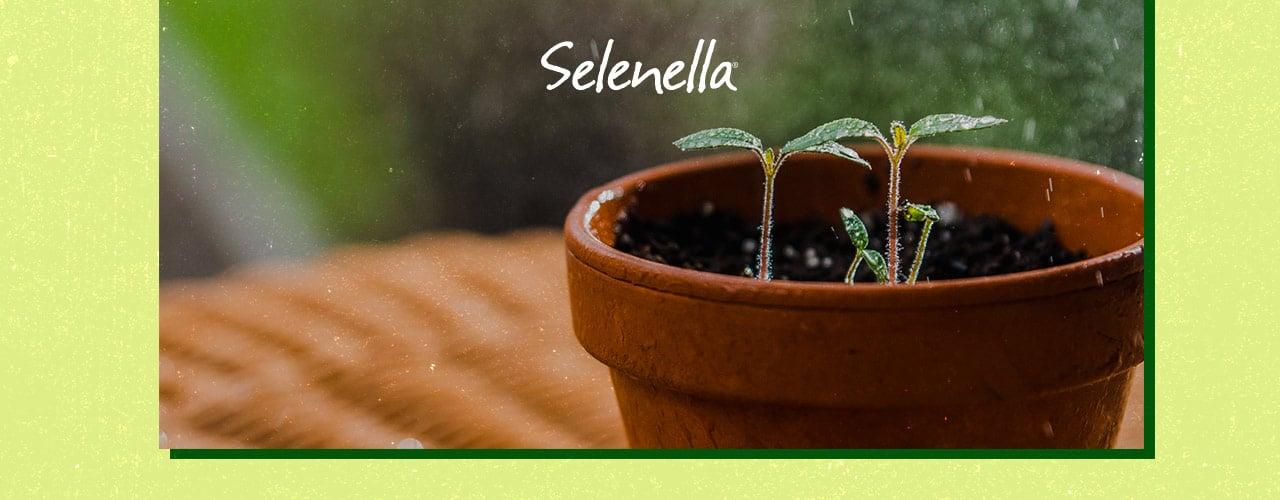 Coltivare patate, carote e cipolle in vaso: alcuni consigli utili - Il Blog di Selenella
