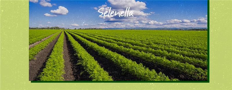 Impronta carbonica: le emissioni di CO2 e gas serra nell'agricoltura - Il Blog di Selenella