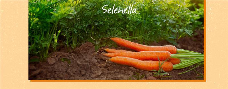 Come coltivare le carote: tutto quello che c'è da sapere - Il Blog di Selenella