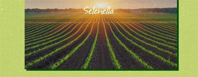 Sostenibilità etica e agricoltura sostenibile: cosa significa parlarne oggi? - Il Blog di Selenella