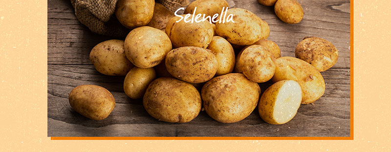 Patate farinose o a pasta soda? Come scegliere i diversi tipi di patate per le tue ricette - Il Blog di Selenella
