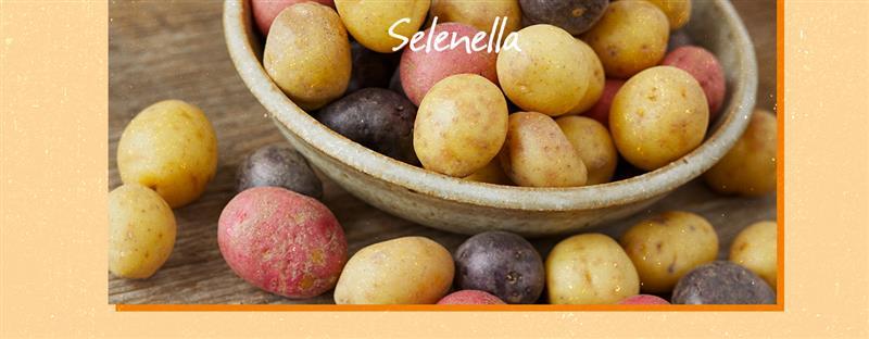 Tuberi: patate ma non solo - Il Blog di Selenella